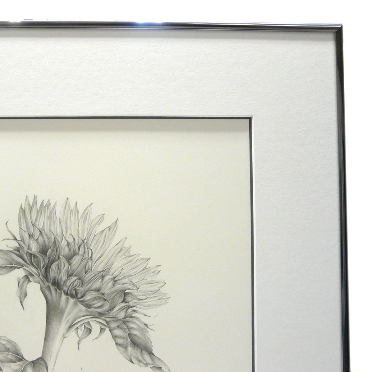 A simple frame for an exquisite drawing simon robinson son as jeuxipadfo Images